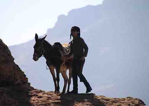 unruly donkey and owner on trail to petra