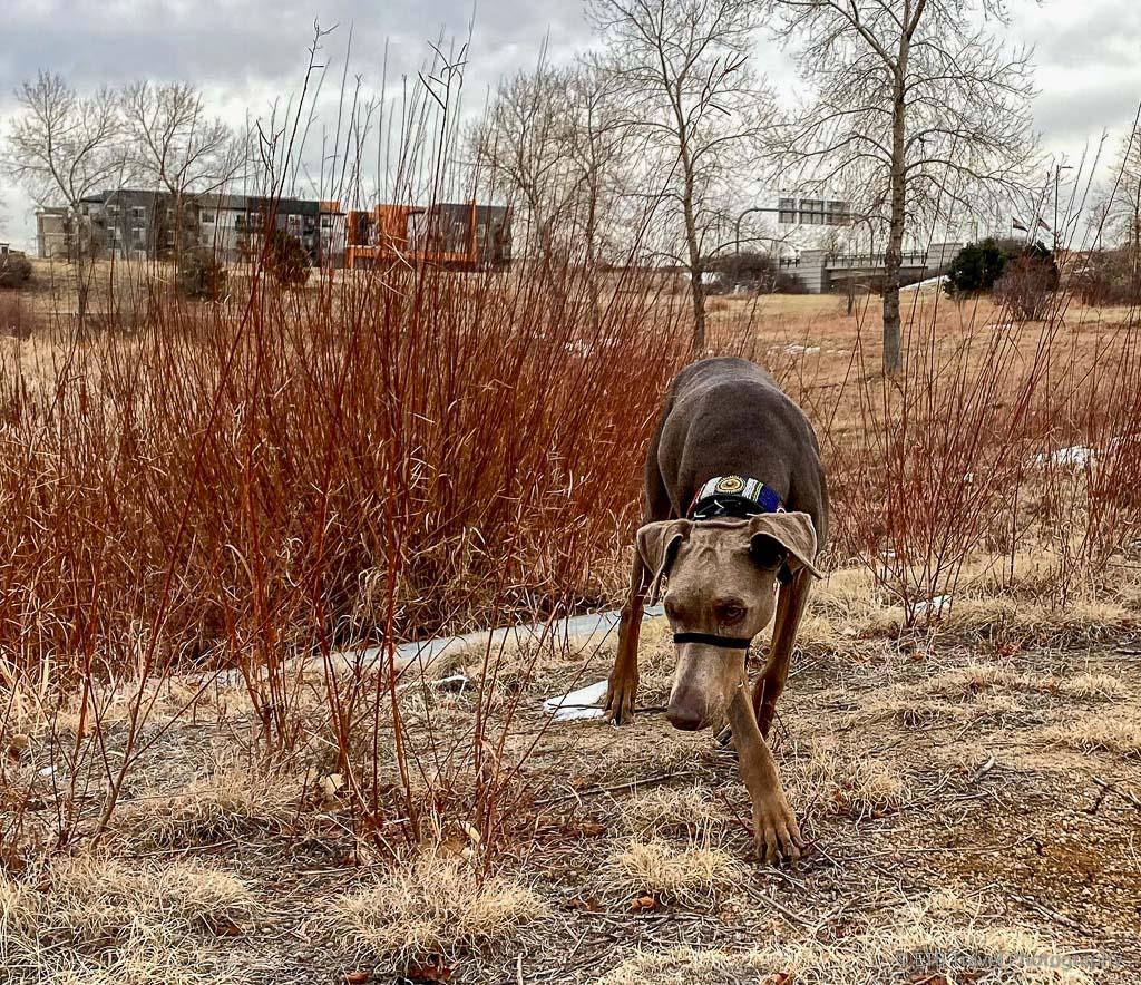 annie at northfield pond park