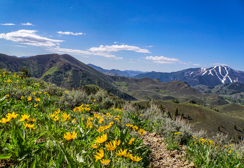 wildflowers and view on taylor canyon loop