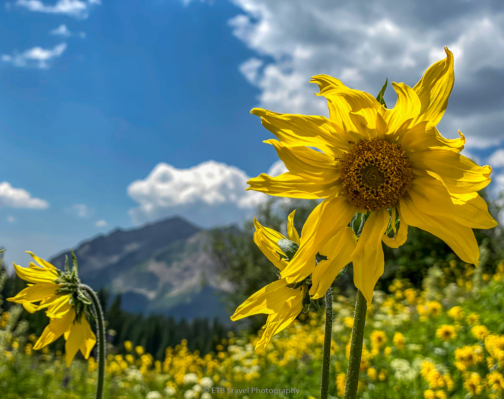 wildflowers at rustlers gulch, crested butte