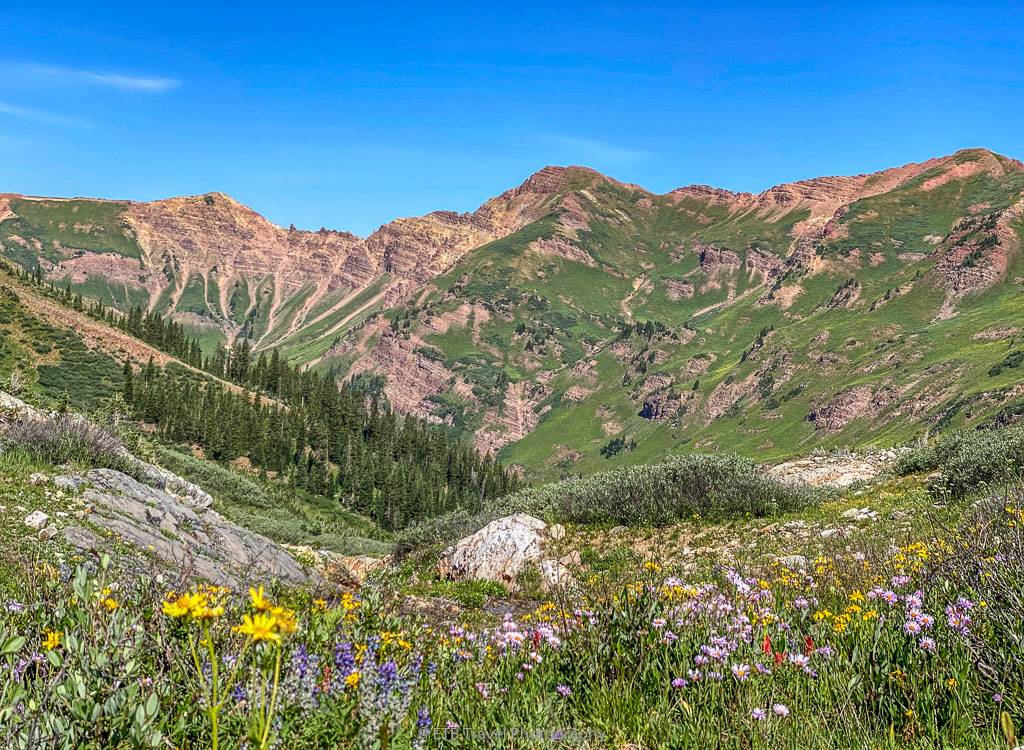 wildflower hike in Crested Butte